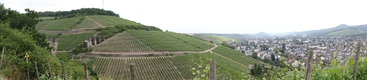 Vineyards. Vineyard at Ahrweiler in sommer Royalty Free Stock Photo