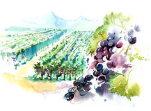 Vineyards. Vineyard in a mountain valley Stock Photo