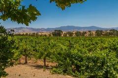 Vineyards. Vineyard in the Santa Barbara wine country of California Royalty Free Stock Images