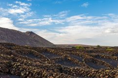 Vineyards on volcanic land in Lanzarote royalty free stock photo