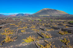 Vineyards in Volcanic Landscape on Lanzarote Royalty Free Stock Photos