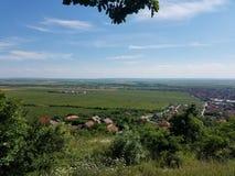 Vineyards Vrsac Royalty Free Stock Photo