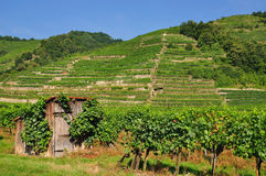 Vineyards in the Wachau,Austria. Typical vineyards with a hut in the wachau,austria Royalty Free Stock Images