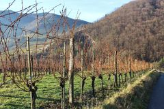 Vineyards in the Wachau, Austria, Europe. Royalty Free Stock Images