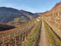 Vineyards in the Wachau, Austria, Europe. Stock Photography