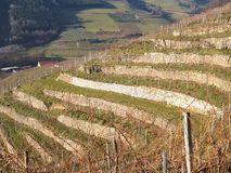 Vineyards in the Wachau, Austria, Europe. Stock Images