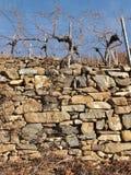 Vineyards in the Wachau, Austria, Europe. Royalty Free Stock Photo