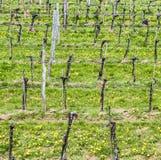 Vineyards in the Wachau region Stock Photo