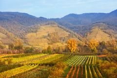 Vineyards on Wachau valley Stock Photos