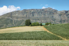 Vineyards in the way to Citrusdal. At R303 road, South Africa stock photography