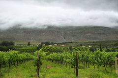 Vineyards in the way to Montagu Stock Image