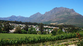 Vineyards in Western Cape, South Africa Royalty Free Stock Photos
