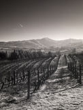 Vineyards, Willamette Valley in Infrared stock image