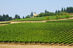 Vineyards in the Willamette Valley Oregon Stock Image