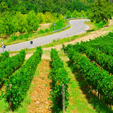 Between Vineyards Royalty Free Stock Photography