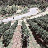 Between Vineyards Royalty Free Stock Images