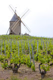 Vineyards with windmill Stock Image