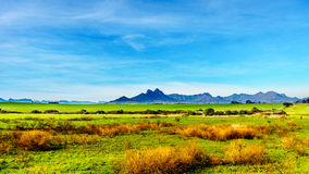 Vineyards in the wine region of Stellenbosch. In the Western Cape of South Africa. Simonsberg in the background on a nice South African winter day royalty free stock images