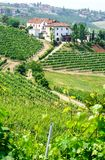 Vineyards and wineries in Piemont. Near the village of Barolo, Italy Stock Photos