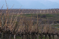 Vineyards in winter Royalty Free Stock Photos