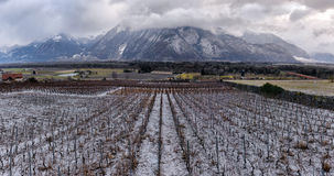 Vineyards in winter Stock Photography