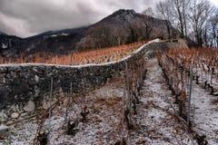 Vineyards in winter Stock Image