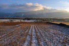 Vineyards in winter Stock Photos