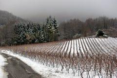 Vineyards in winter Stock Photo