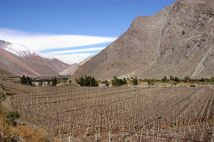 Vineyards in winter royalty free stock photography