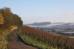 Vineyards in winter, Luxembourg. Vineyards against a blue winter sky, Luxembourg Stock Images