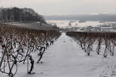 Vineyards in winter Stock Photo