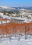 Vineyards in winter Stock Image