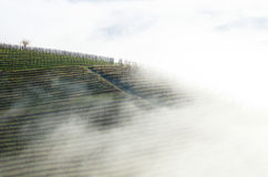 Vineyards wrapped in fog Royalty Free Stock Photo