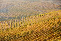 Vineyards with yellow leaves in a sunny fall day. In Europe stock photo