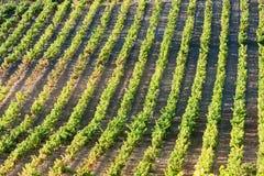 Vineyars, Γαλλία Στοκ φωτογραφίες με δικαίωμα ελεύθερης χρήσης