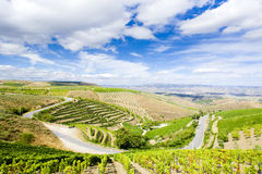 Vineyars in Douro. Valley, Portugal Royalty Free Stock Images