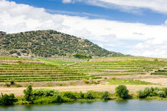 Vineyars in Douro Valley Royalty Free Stock Photography