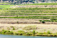 Vineyars in Douro Valley Stock Photography
