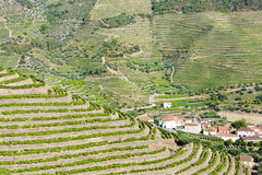 Vineyars in Douro Valley Stock Photo