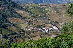 Vineyars in Douro Valley stock photo