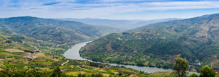 Vineyars in Douro Valley Royalty Free Stock Photos