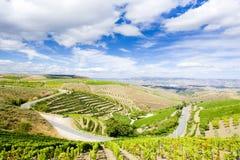 Vineyars em Douro imagens de stock royalty free