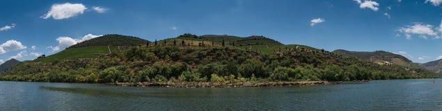 Vineyars en el valle del Duero Foto de archivo