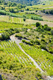 Vineyars in France Stock Photo