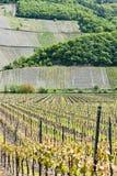 Vineyars, Germany Royalty Free Stock Photography