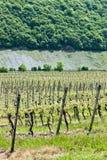 Vineyars, Germany Stock Photography