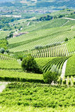 Vineyars near Barbaresco Stock Images
