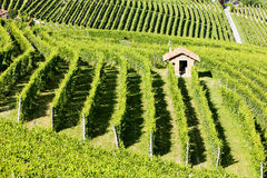 Vineyars near Barolo Royalty Free Stock Image