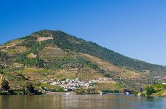 Vineyars no vale de Douro fotografia de stock royalty free