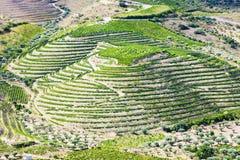 Vineyars no vale de Douro fotografia de stock